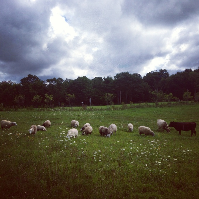 Flock Grazing